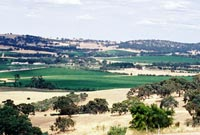 Panorama of Clare Valley